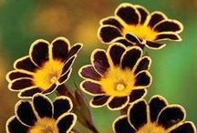 *Fantastic Florals* / The Colorful Art of Flowers!