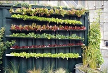 Urban Farming / Making the most of the concrete jungle...