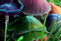 Marvelous Mushrooms & More / Fungi, Lichens, Molds, Mushrooms, Toadstools