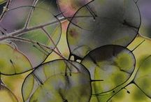 Zentangle & drawing