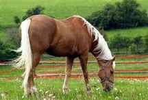 ♡ Exquisite Equines ♡ / Magnificently Beautiful & Superbly Graceful Horses