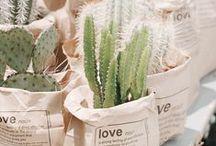 Cacti, Terrariums, & Succulents