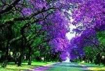 ~Road to joy~ / by Melissa Scott