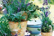 ~For the Garden~ / by Melissa Scott
