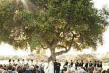 wedding / by Hannah Bryant