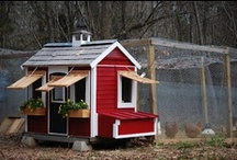 Coop de Ville / I'm obsessed with the notion of a gypsy wagon chicken coop on wheels. Lots of coop inspiration here!  / by Eclectic Design