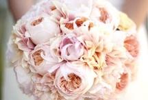 Flowers / by Little Maison (mandy f.)
