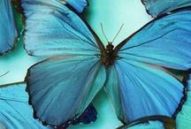 Butterfly memories / by Imogheena Farandel