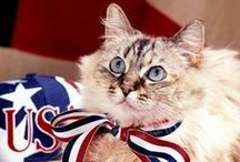 Americana & Patriotic Cats / Honor the RED, WHITE & BLUE with our feline friends!