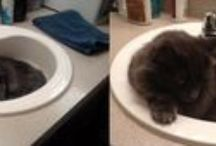 """Everything But The Kitchen Sink"" / Cats claim a perfect bed when they see one!  Sinks are just deep enough and shaped just right for a curled up snooze."