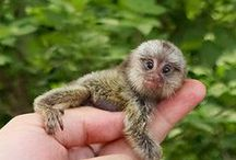 Pet Me / Cute, kooky or awe-inspiring animal photography.