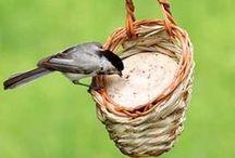 animal: birds