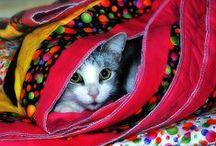 animal: cat & quilt