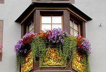 windows / windows