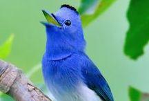 Birds like colorful flowers / birds