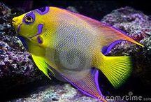 Underwater world / animals