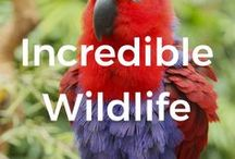 Incredible Wildlife / The world is full of amazing creatures. Here's a glimpse at what incredible wildlife you can encounter in your travels. We hope to inspire you explore the world and discover those beautiful animals.