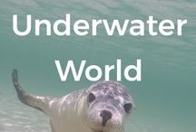 Underwater world / Want to know all the secrets of the underwater world? Love the sea and marine life? This board is for you.