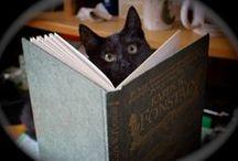 Książki i koty / cats and books / Obrazki z czytającymi kotami lub pojawiającymi się w tle, koty w bibliotece itd.