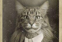 Koty / Koty w fotografii, w malarstwie itd.