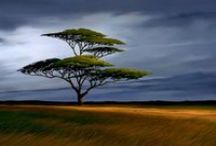 Landscapes: Concept Art & Inspiration / Wide open spaces.
