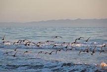 Santa Barbara Wildlife / Santa Barbara is full of wildlife. What have you spotted lately? / by edhat Santa Barbara