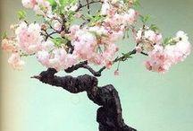 bonsai kwitnące