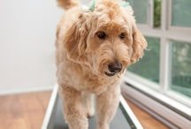 Dog health, nutrition and grooming