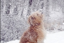 Snow Dogs / by Col. Potter Cairn Rescue Network