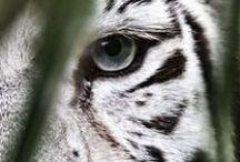 Miauus / by Corset.Tattoo.Leopard