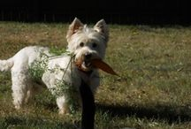 Life's a Garden - Dig It! / Gardening and landscaping, including pet-friendly ideas and designs.
