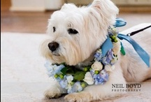 Weddings with Dogs / by Col. Potter Cairn Rescue Network