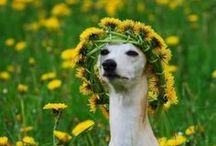 Fido and Flowers