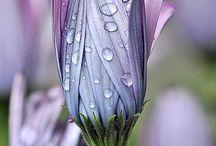 CORES / Natureza vibrante!