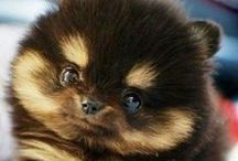 Les trop mignons! / Parce qu'il ne leur manque plus que la parole à ces adorables petites créatures!