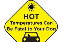 "Hot weather and ""Dogs"" /  great tips on Hot weather care for dogs  / by Col. Potter Cairn Rescue Network"