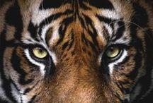 Animals / The animal kingdom