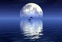 dolfijnen / dolfins
