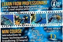 Only One Apnea Center / Only One Apnea Center is the first free diving center in Sharm El Sheikh