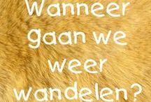 wandelen / walking