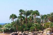 Palm Trees / Palm Trees