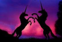 Unicorns / Who doesn't love unicorns?