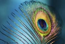 Peacocks & Pretty! / An array of objects de beauty...