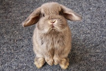 Animals - Bunnies, Bunnies Everywhere! / by Tammie Madore