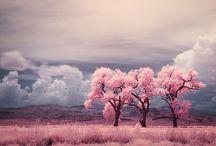 Nature / Nature