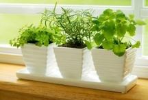 Gardening Ideas / by Myrna Vega