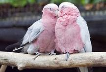 Animals - Birds / by Myrna Vega