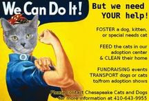 Ways to Help CCAD / Chesapeake Cats and Dogs relies on volunteers and donations to continue our mission of helping homeless cats and dogs.