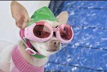 Our Blogs / Pet Medical Center - Chatoak Blogs