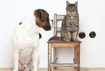 Pet Wellness Care